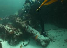 A diver with a canon retrieved from the São José slave ship wreck in Cape Town, South Africa